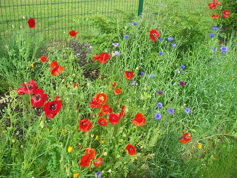 prairie-fleurie